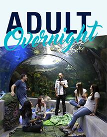 Adult Overnight